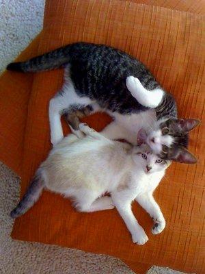 Kittens iPhone